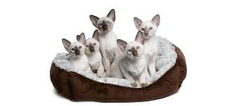 choosing a cat bed is all about our cat s personality