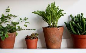 how houseplants charmed a new generation of gardeners