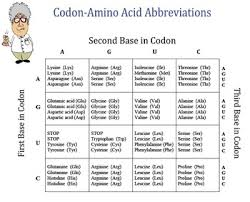 Chart Of Amino Acids And Messenger Rna Codons