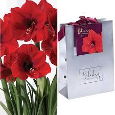 van zyverden amaryllis ferrari bulb in silver gift bag