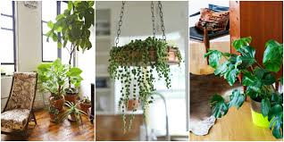 cheap office plants. 15 Best Indoor Plants Good Inside For Small Space Gardening View Gallery. Rustic Home Decor Cheap Office