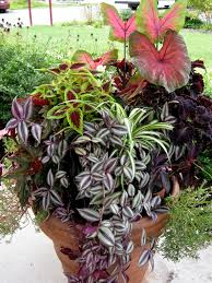 Small Picture Interesting Container Garden Design Il Y For Decorating