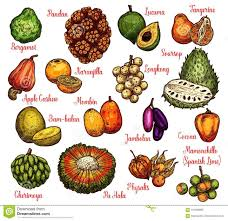 tropical fruit names. Interesting Fruit Download Isolated Exotic Fruits Vector Sketch Stock  Illustration  Of Farm Bambalan For Tropical Fruit Names C