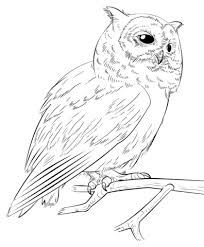 Small Picture Southern white faced owl coloring page Free Printable Coloring Pages