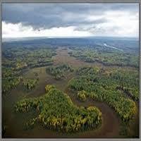 Природа Западной Сибири