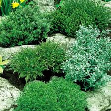 Small Picture 178 best New Border Plants images on Pinterest Border plants