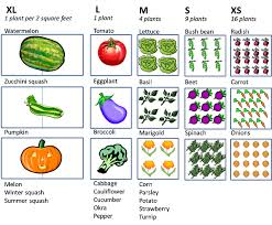 Square Foot Garden Plant Spacing Chart Vegetable Cartoon Clipart Garden Vegetable Square
