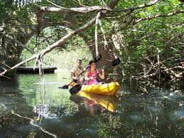 dragonfly expeditions great discoveries on the bay a kayak journey
