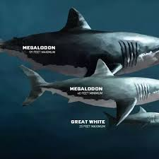 megalodon shark compared to t rex.  Shark Answer Wiki With Megalodon Shark Compared To T Rex N