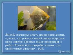 Презентация на тему Рыбы удивительные создания природы Автор  4 Вывод анализируя