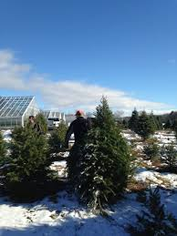 Best Places to cut down your own Christmas tree in New York