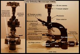 Using A Good Compound Light Microscope Mic Uk Light Microscopy And Photomicrography