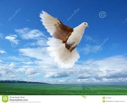 Light Brown And White Pigeon Flying White Brown Pigeon Stock Photo Image Of High Beak