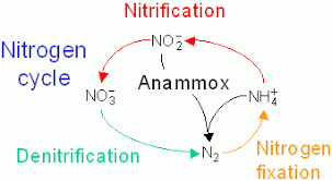 Nitrogen Cycle Definition Steps Importance And Solved Example