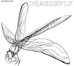 Small Picture Bug Coloring Pages Dragonfly Coloring Page With Bug Coloring