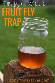 thrifty and all natural fruit fly trap using vinegar and dish soap happymoneysaver com