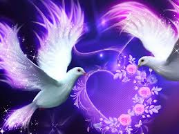 cynthia selahblue cynti19 images love birds hd wallpaper and background photos
