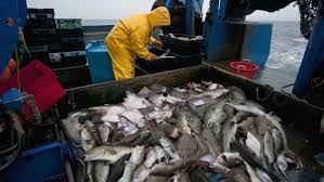 Fishing Activity Chart Mercury Levels In Fish Are Rising Despite Reduced Emissions