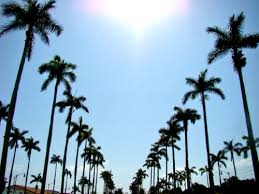 Tumblr Palm Trees Vertical The Image Ideas Blog