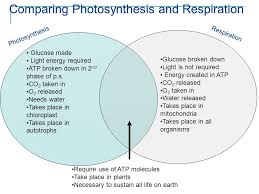similarities between photosynthesis and cellular respiration concept similarities between photosynthesis and cellular respiration comparing shot luxury