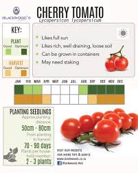 Tomato Seed Growth Chart Blackwoods Co Za Download Your Vegetable Planting Charts