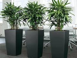 plants for office space. modren office indoor plant pots online nz ideas plants in office space  google search a for