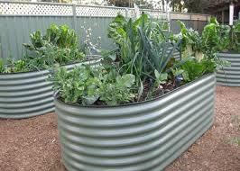 growing food in raised beds