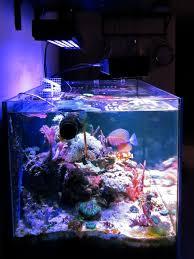 Foto acquario marino e aggiornamento