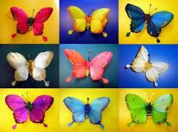 Hasil carian imej untuk Kupu kupu tidak akan pernah tahu apa warna sayap mereka