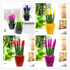 cheap office plants. Cheap Indoor Plant Pots Mixed Colors Seeds Potted Balcony Office Plants Garden H