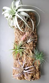 50 creative ideas to display your air plants in a most spectacular way home garden 15 50