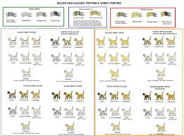 Cat Color Chart Colour And Coat Genetics In Cats Cats From Your Wildest Dreams