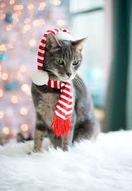kitty is ready for the with his festive winter scarf winter