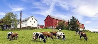 Сельское хозяйство Норвегии ru вся Норвегия на Русском Сельское хозяйство Норвегии