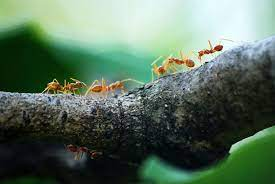 what kills ants instantly natural pet