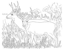 Awesome Deer In Forest Coloring Pages Doiteasyme