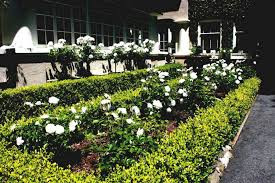 Small Picture Best Of Boxwood And Iceberg Roses Rose Garden Design Ideas Home