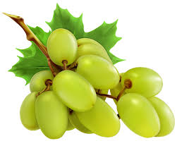 grapes clipart black and white. white grapes png clipart black and