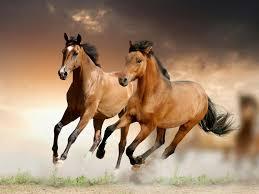 beautiful baby horses wallpaper.  Horses Horses Wallpaper HD New Tab  Horse Themes Free Addons On Beautiful Baby A