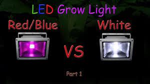 White Led Grow Light White Led Vs Red Blue Led Grow Light Grow Test Part 1 Educational 2016