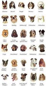 dog breeds alphabetical. Exellent Breeds Alphabetical List Of Dog Breeds With Pictures In Dog Breeds O