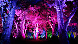 Light Art Video Kyotos Primeval Forest To Come To Life In Beautiful