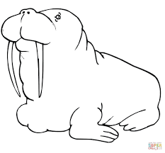 Small Picture Walrus coloring pages Free Coloring Pages