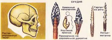Направления эволюции человека Древние и первые современные люди  Реставрированный череп и орудия труда кроманьенца