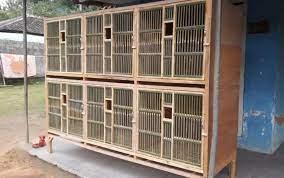 Cara membuat rangka kandang ayam bangkok 8 ruang 8 pintu. Ukuran Kandang Ayam Bangkok Aduan 5 Cara Membuat Kandang Ayam Bangkok Serta Jenis Jenisnya Kandang Ayam Bangkok Kandang Yang Baik Adalah Kandang Yang Dapat Menjadi Tempat Hidup Nyaman Bagi Ayam