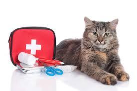 cat with first aid kit ile ilgili görsel sonucu