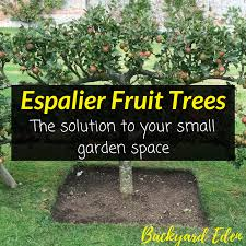 espalier fruit trees the solution to your small garden space backyard eden