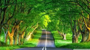 best nature image