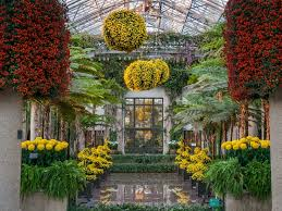 kennett square pa autumn is in full swing and so is the much antited chrysanthemum festival at longwood gardens when the 4 acre grand conservatory is