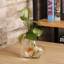 Glass <b>Plant</b> Vase reviews – Online shopping and reviews for Glass ...